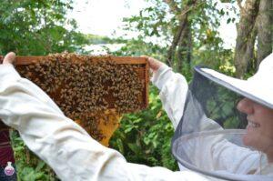 اسید اگزالیک در زنبور داری