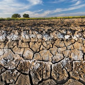 انواع خاک کشاورزی