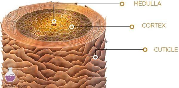 ساختار مو از نظر شیمیایی چگونه است ؟