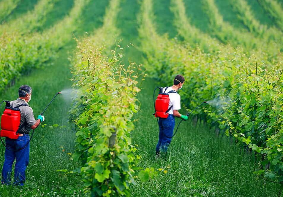 کاربرد سولفات مس در کشاورزی