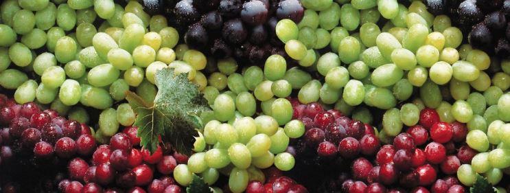 کاربرد مونو پتاسیم فسفات در انگور