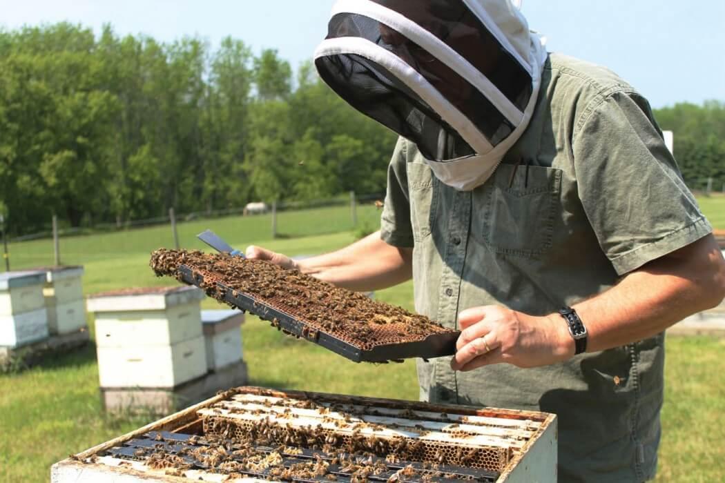اسید فرمیک در زنبورداری