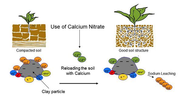 نیترات کلسیم در گیاه