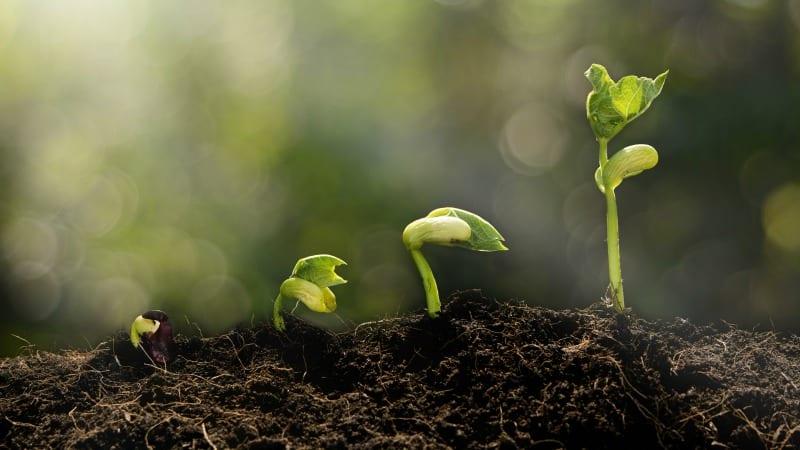 مزایای پتاس یا پتاسیم هیدروکسید برای گیاه