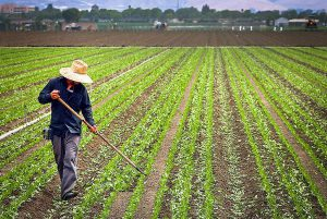 کاربرد 2 اتیل هگزانول در کشاورزی