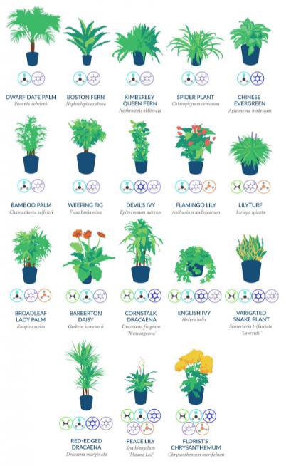 تصفیه ی هوای منزل با گیاهان