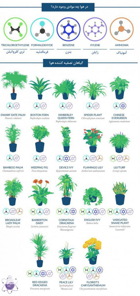 تصفیه هوای خانه با گیاهان