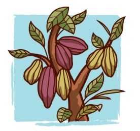 کاشت گیاه کاکائو