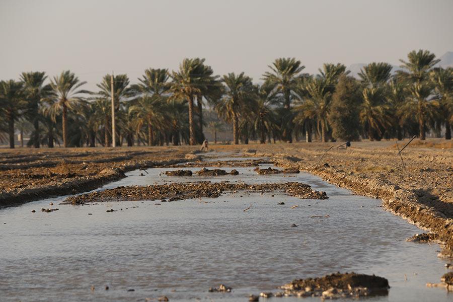 مصرف آب در کشاورزی سنتی