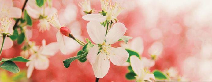 رایحه های موجود در عطر های بهاری