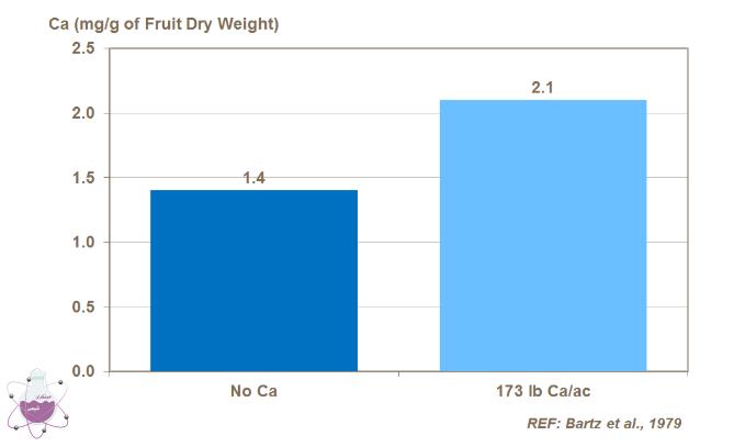 تاثیر کود کلسیم بر رشد و کیفیت گوجه فرنگی