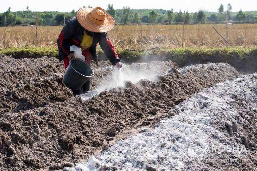 آهک کشاورزی