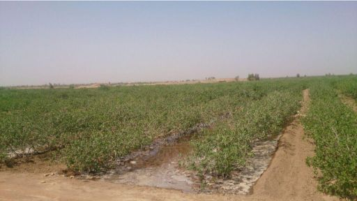 شوری خاک (EC) چیست ؟ | روشهای مبارزه با شوری خاک