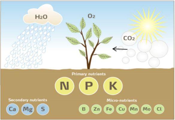 عناصر مورد نیاز گیاه