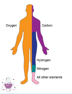 کاربرد شیمی در بدن انسان