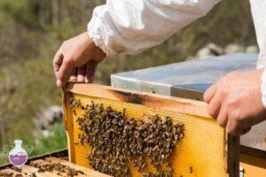 کاربرد اسید فرمیک در زنبورداری