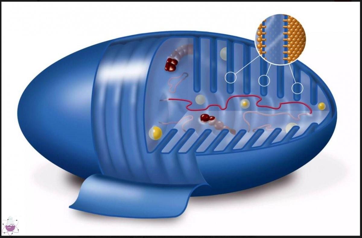 تولید انرژی در سلول ها