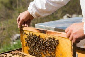 زنبورداری و مواد شیمیایی مورد استفاده در آن