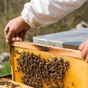 زنبورداری و کاربرد اسید اگزالیک و اسید فرمیک در آن