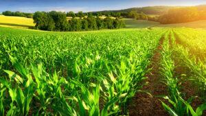 کود آمونیوم تیوسولفات در کشاورزی