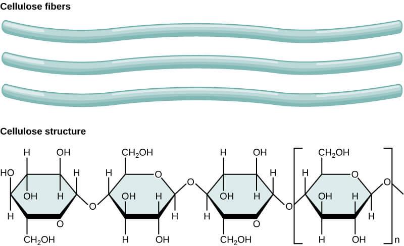 ساختار پلیمری سلولز