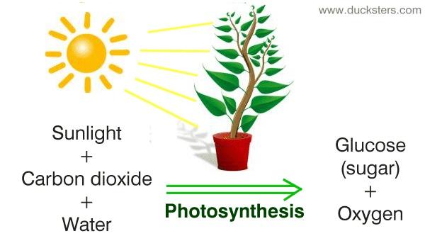 فتوسنتز و تبدیل انرژی خورشیدی به شیمیایی