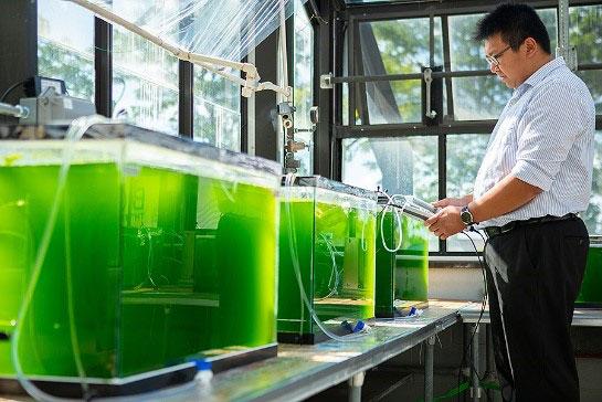 روش بیولوژیکی جداسازی کربن دی اکسید